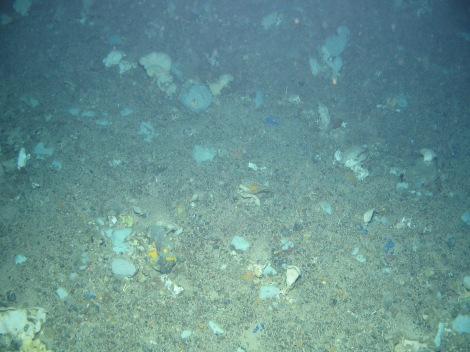 Sponges dominate the sea bed at 500m down on the continental slope west of Shetland. This habitat is known as 'ostebund' or 'cheese bottoms'. Image Crown copyright © 2006.