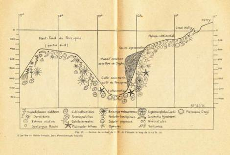 Map of cold water coral reef in Dingle Bay (taken from Le Danois, 1948.