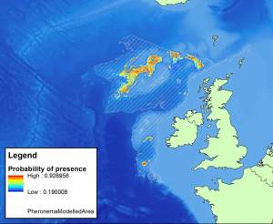 Map of the predicted distribution of deep-sea sponge fields composed of Pheronema carpenteri in UK and Irish deep sea